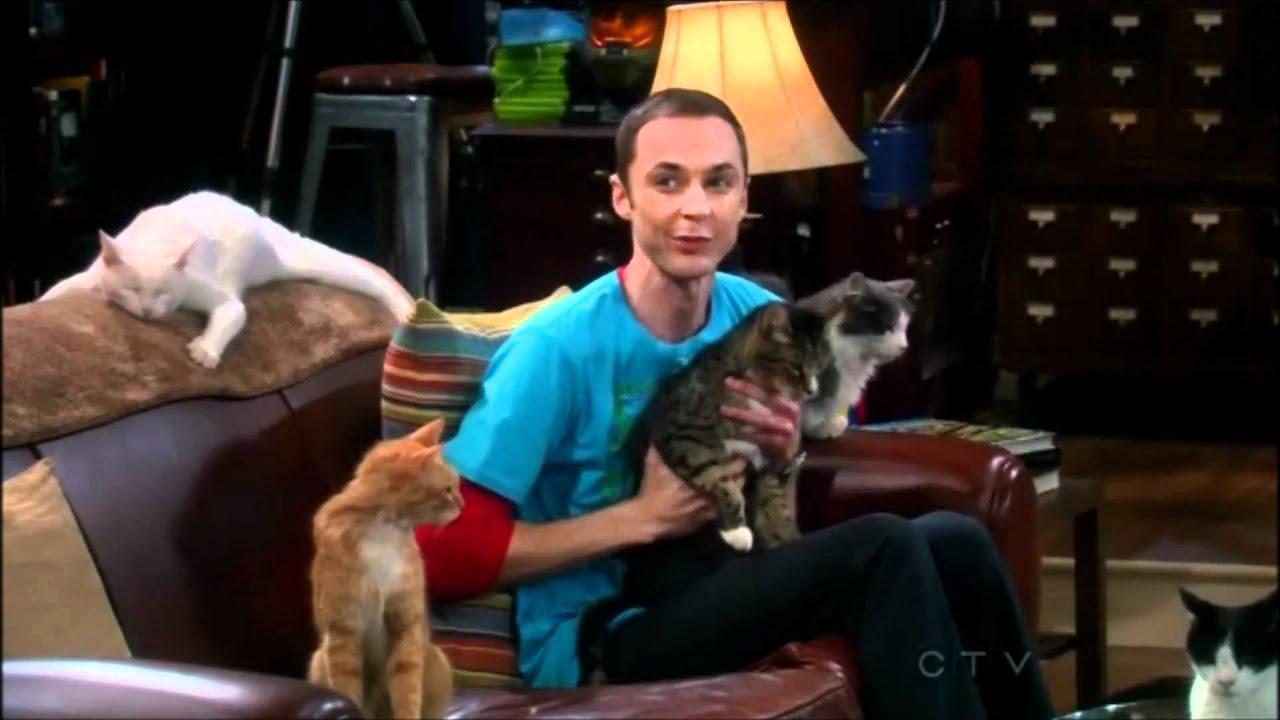 Big Bang Theory Sheldon Cat Gif