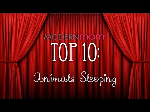 Sleepy Animals - ModernMom Top 10