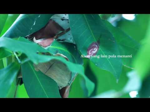 Hijjaz- Pelita Hidup