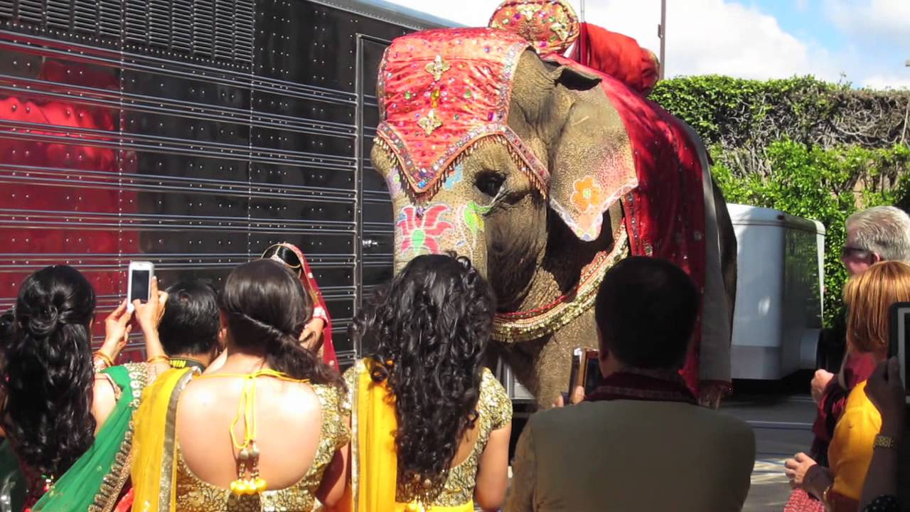 Elephant Wedding Elephant Used in Hindu Wedding