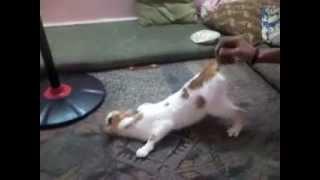 سكس مصري يجنن دانا قطتي