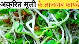 radish sprouts microgreens  हिन्दी  में