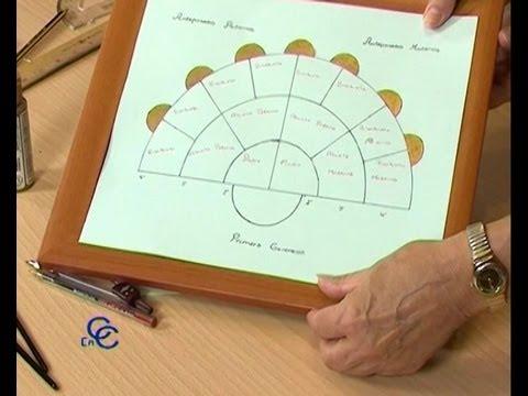 Como hacer un arbol genealogico de la familia youtube for Como se forma el marmol