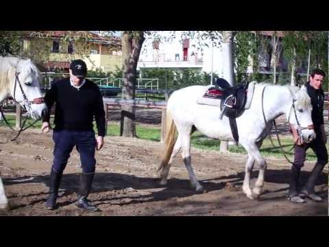 """Terapia assistita con l'ausilio di cavalli al centro ippico """"Le Redini"""""""