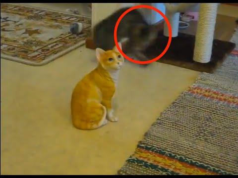 子猫が猫の置物に何度もア...