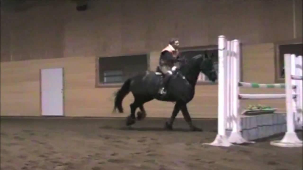 Friesian Horses Jumping Zanzibar Friesian Horse