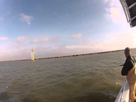 Galveston Jetties Bull Red