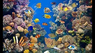 Fun Day Monday: Plant Life Underwater, More than on Dry Earth?