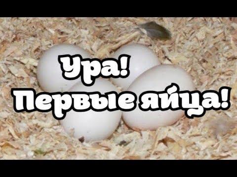 Новости канала 15.09.17. Лайма снесла яйцо! Когда новый питомец?