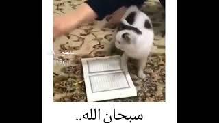 واکنش باورنکردنیه گربه نسبت به قرآن!