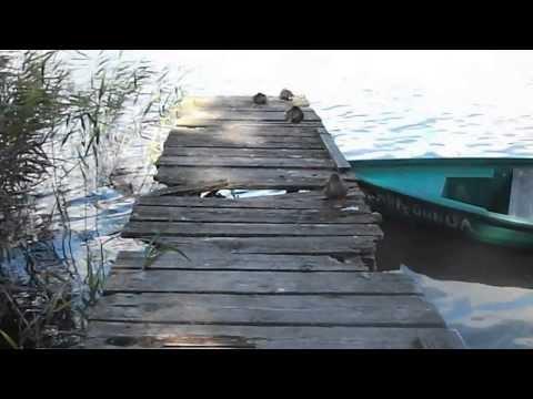 MAZURY 2013, jezioro Mokre, Zgon, kaczki