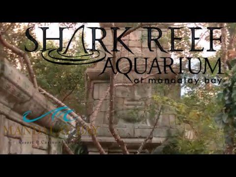 Shark Reef Aquarium at Mandalay Bay Las Vegas Tour & Review