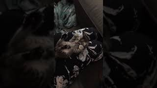 Funny cats   Fostering cats EP1