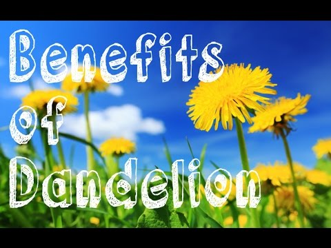 The Benefits of Dandelion. How to prepare Healthy Dandelion Coffee.