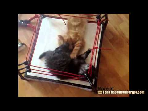 Cheezburger : Cat Wrestling
