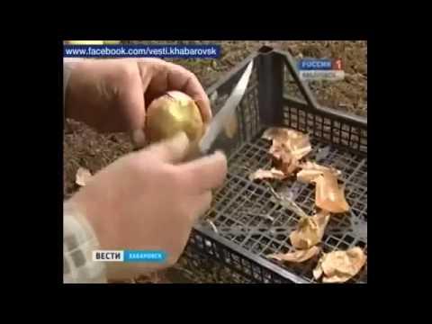 Бизнес без вложений с нуля идеи Выращивание зеленого лука