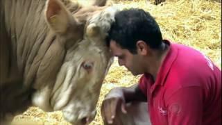 ONG percorre mundo inteiro resgatando animais em perigo