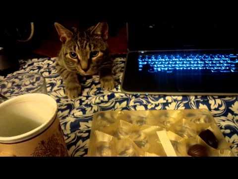 Cat Molik is having fun. Crazy Cute Cat Molik.Кот Молик сбрасыввает все со стола!)))