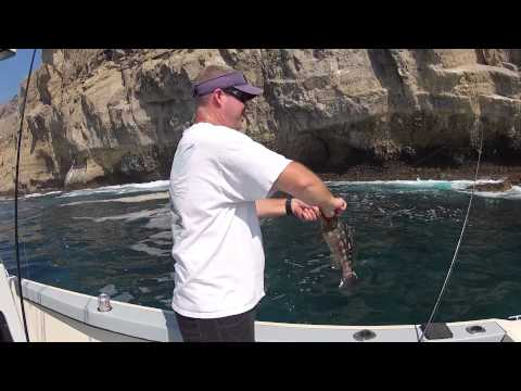 Calico Bass Fishing (How to Rig a Swim Bait)