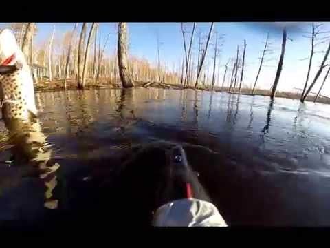 ловля щуки на бурейском водохранилище