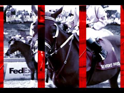 Racing Stripes -Thanks For The Memories - Dedicated to ALL my great friends!