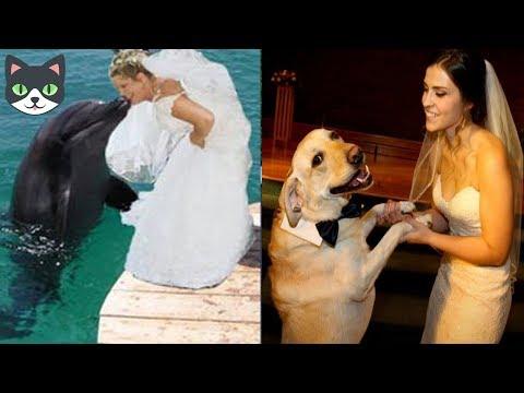 10 Matrimonios Que No Creerás Que Existen | SEXO CON ANIMALES