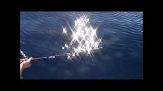 wrightsville offshore 11-26-11 sailfish