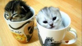Porque Los Gatos Siempre Son Cuquis | SI TE RIES PIERDES (EXTRAORDINARIO) #4