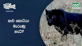 Neth FM Balumgala | 2020-06-02