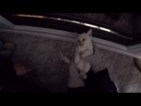 Impresionante, una familia revive a un gatito congelado en la nieve