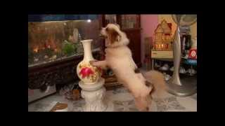 Chú chó nghệ sỹ