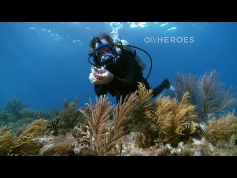 CNN: CNN Hero, Ken Nedimyer Bringing life back to coral reefs
