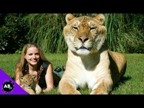 Top 5 Amazing Animal Hybrids! 5 Weird Animal Facts - Ep. 41