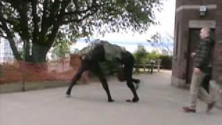 BigDog Beta (early Big Dog quadruped robot testing)