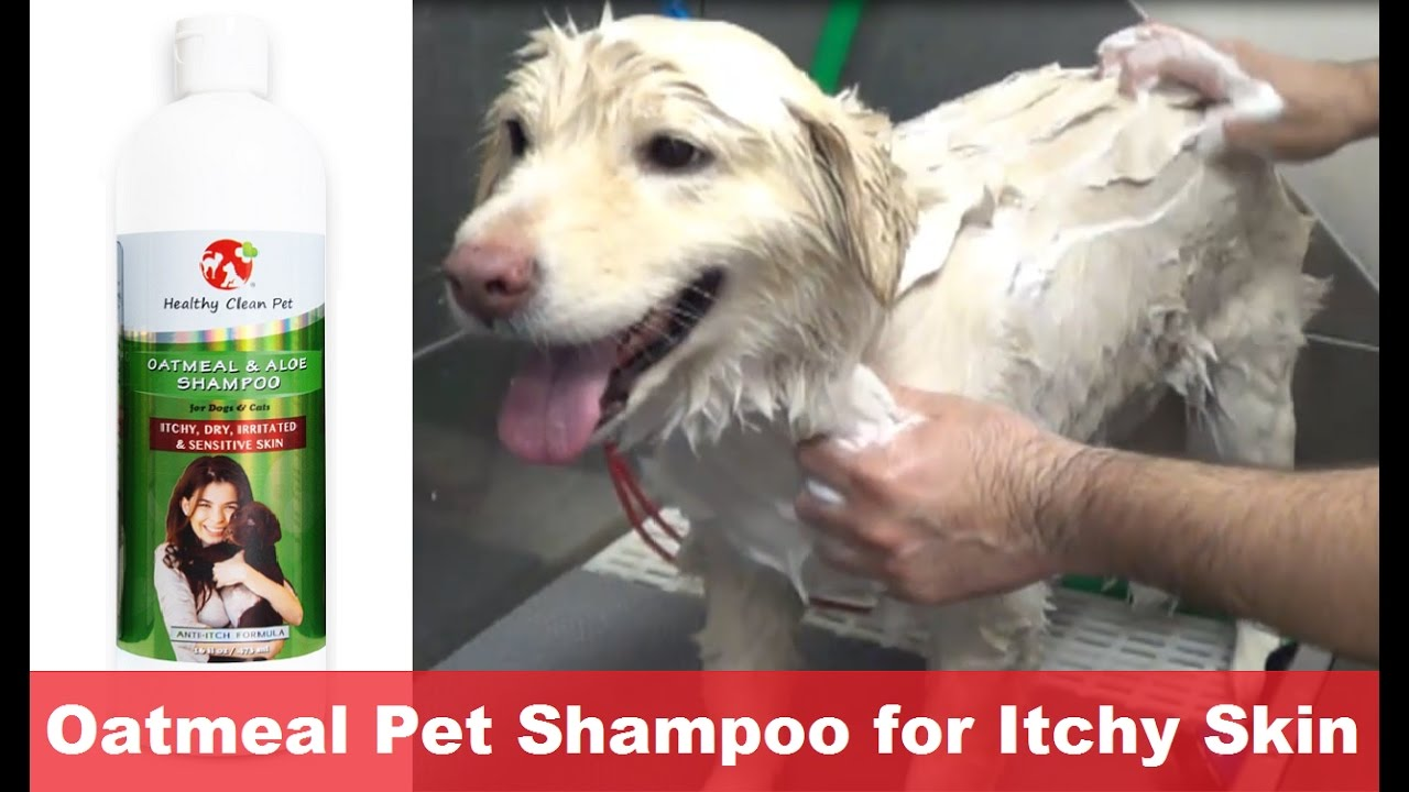 Skin Shampoo For Dogs Dog Shampoo For Dry Itchy