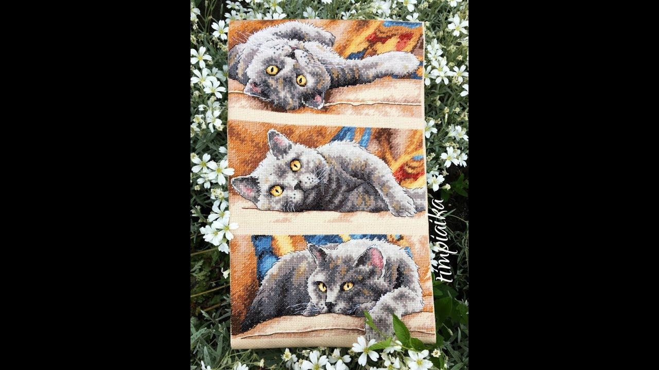 Вышивка крестиком кот макс 86