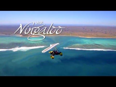 Visit Ningaloo TV Advert - Version 1