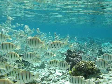 Convict Tang Wiki School of Convict Tang Quot