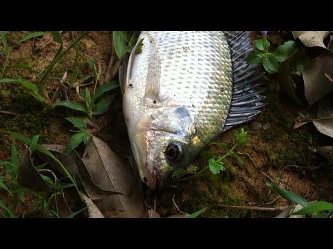 Tilapia Fishing   C  U C   R   Phi   Th   I C   R