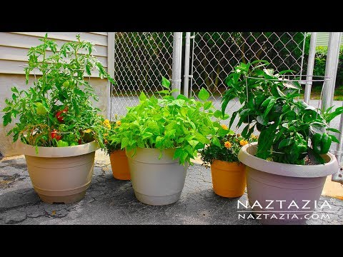 learn how to garden for beginners container gardening urban rooftop porch patio balcony. Black Bedroom Furniture Sets. Home Design Ideas