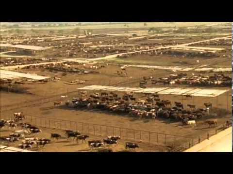 II MUESTRA CINE Y DISCAPACIDAD - Trailer