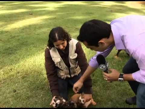 Casais que tratam cães como filhos pode ser prejudicial ao animal