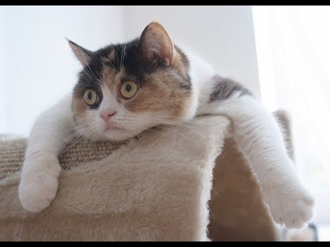 Funny Cats Compilation - Funny Cat Videos Ever- Funny Videos - Funny Animals - Funny Animal Videos 3