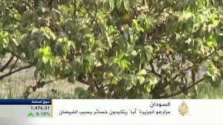 """خسائر مزارعي جزيرة """"أبا"""" بالسودان بسبب الفيضانات"""