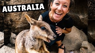 THIS IS WHY AUSTRALIA IS AWESOME (wallabies + world class diving)
