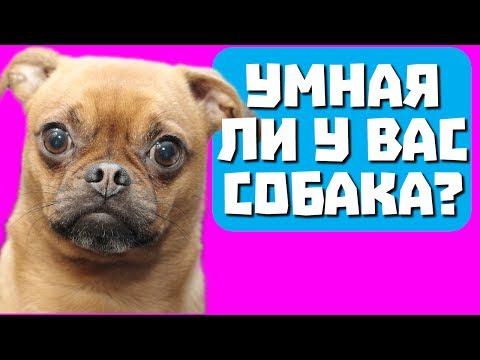 Умная ли у вас собака? Тест с прикольным котом Джемом! 🐈