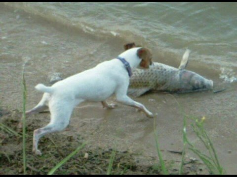 Dog vs fish youtube for Is fish bad for dogs
