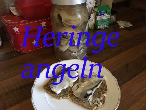 Heringsangeln in Kappeln Hering filetieren Bismarckhering Rezept