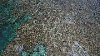 サンゴ死滅、広がる茶色