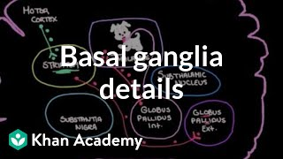 The basal ganglia - Details of the indirect pathway | NCLEX-RN | Khan Academy
